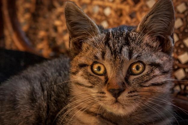 Морда маленького щенка метисы кошки