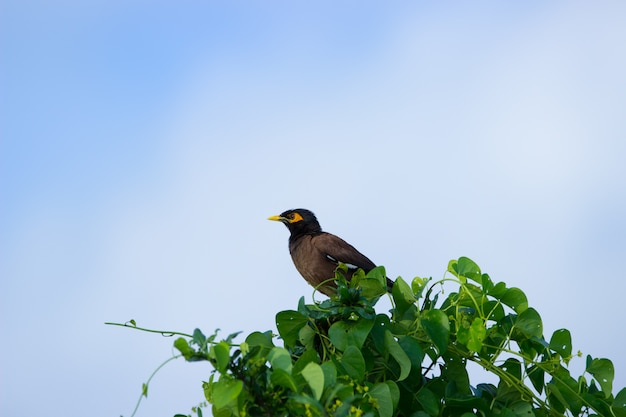 開いた空の木のマイナ鳥