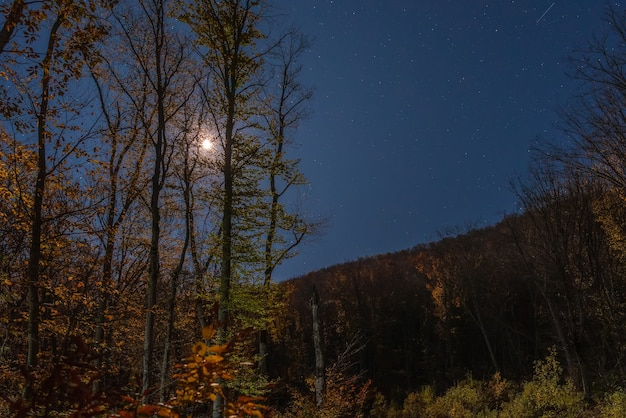 Таинственный осенний лес в лунном свете