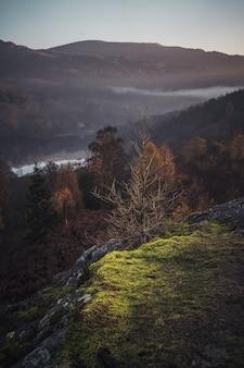 Inquadratura misteriosa di un singolo cespuglio secco sullo sfondo di una foresta nebbiosa con un lago nel lake district