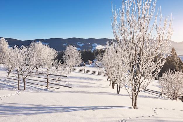 神秘的な冬の風景冬の雄大な山々。魔法の冬の雪に覆われた木。カルパチア。ウクライナ