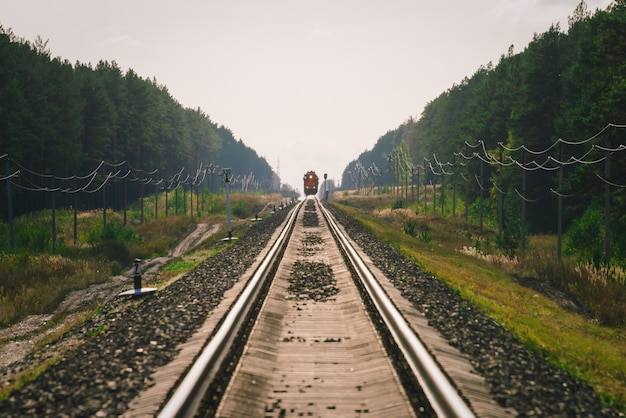 Mystic train travels by rail along forest.