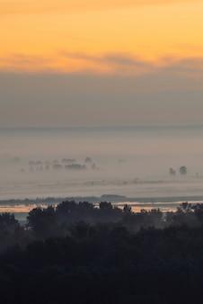 Мистический взгляд на лес под дымкой в рано утром. туман среди силуэтов деревьев под предрассветным небом. золотое отражение света в воде. спокойное утро атмосферный минималистичный пейзаж величественной природы.