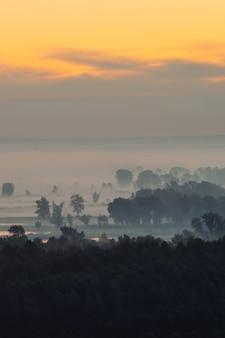 早朝のもやの下の森の神秘的な眺め。夜明け前の空の下で木のシルエットの間で霧。