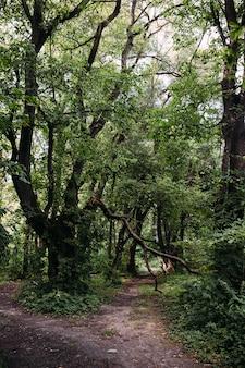 Мистическая атмосфера в старом лесу фантазийный фон с дорогой и сломанным деревом