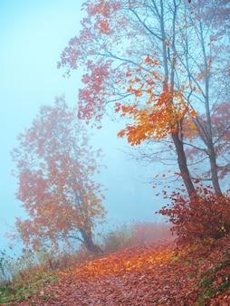 公園の霧と神秘的な秋の風景