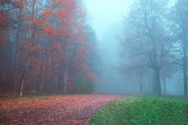 Mystical autumn landscape with fog in the park.