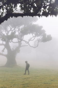 Mystical fanal laurisilva forest at madeira island, portugal