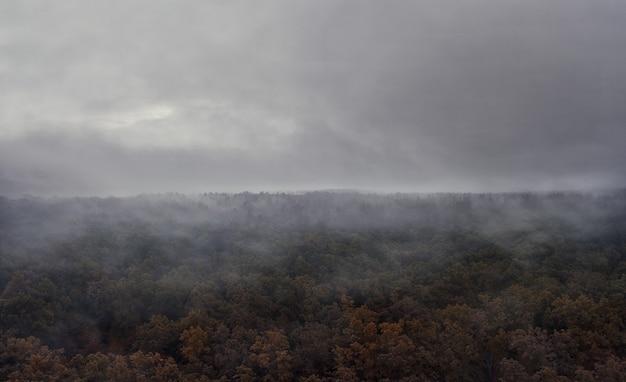 Мистический туманный лес осенним утром с пасмурным небом.