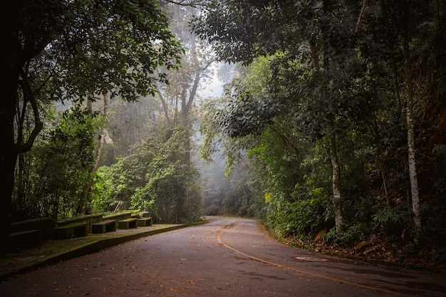 Mystical foggy road in the brazilian jungle.