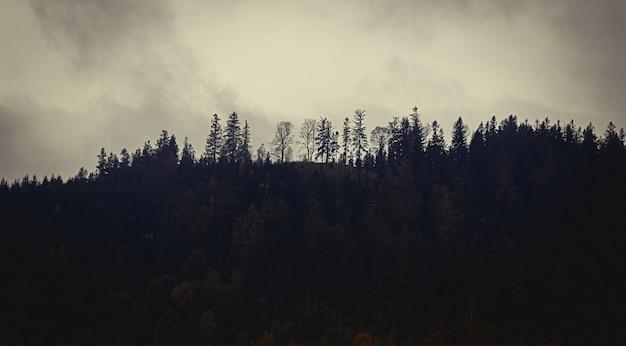 秋の霧の中の神秘的な森