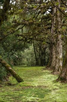 Mystical green forest of brazil