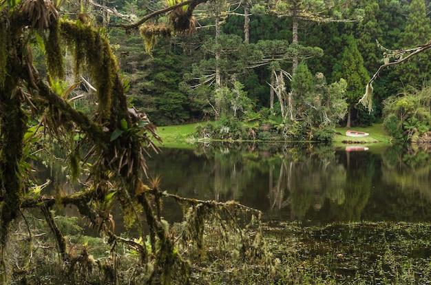 브라질의 신비로운 녹색 숲