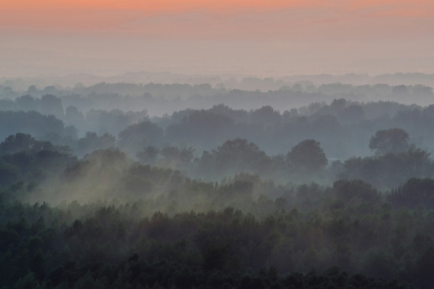 Mystical view from top on forest under haze at early morning.