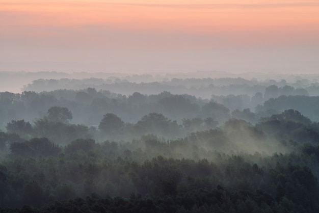 Mystical view from top on forest under haze at early morning