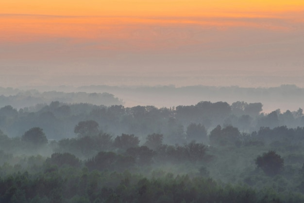 早朝のもやの下の森の上からの神秘的な眺め。夜明け前の空の下、タイガの木のシルエットのレイヤーの間で霧が発生します。
