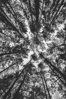 森の天底角