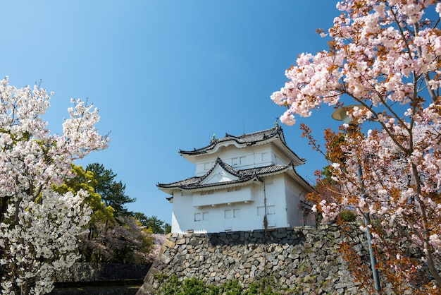 Nagoya castle with pink sakura in spring