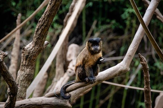 Гвоздь обезьяна в дереве