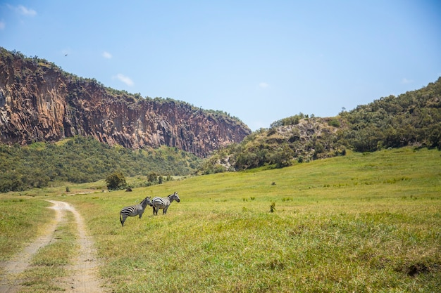Национальный парк найваша адские ворота, полный животных. прогулка по кении или сафари на велосипеде