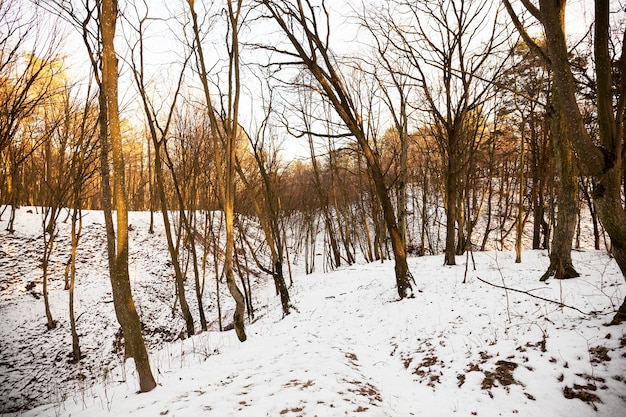 Naked deciduous trees growing in a forest with hills and lit by the dim orange light of the rising sun. winter time of the year, on the ground lies white snow after the snowfall.