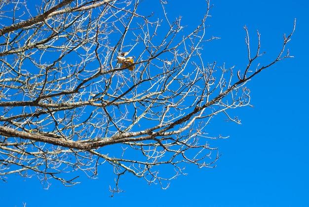 Голые ветки деревьев на фоне неба