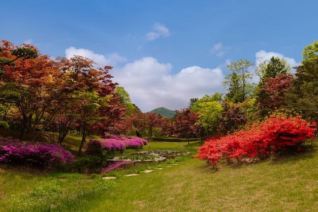 한국 춘천에서 봄의 남이섬