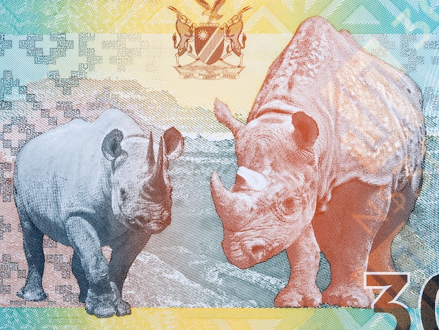 Namibian black rhino a portrait from money