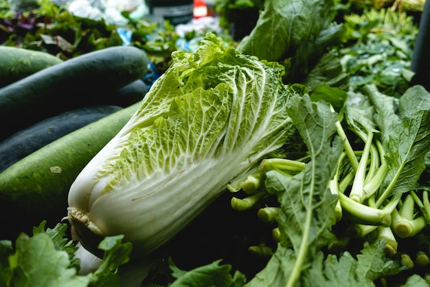 Napa cabbage for sell