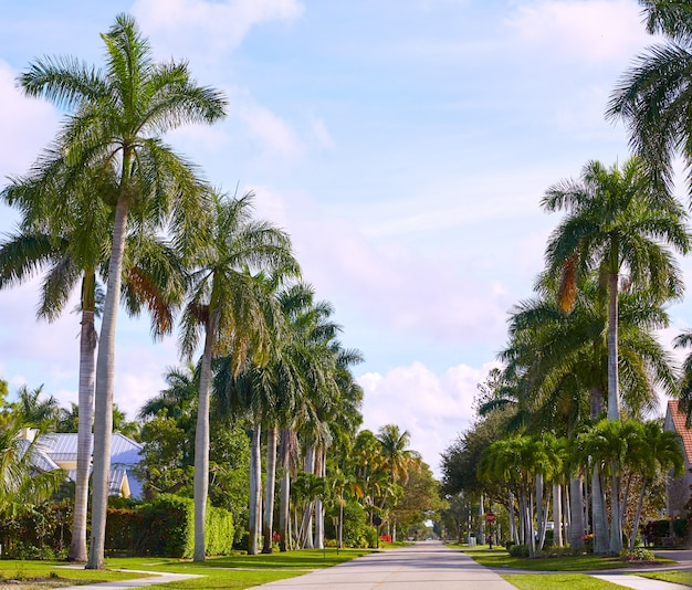 Naples beach streets with palm trees florida us