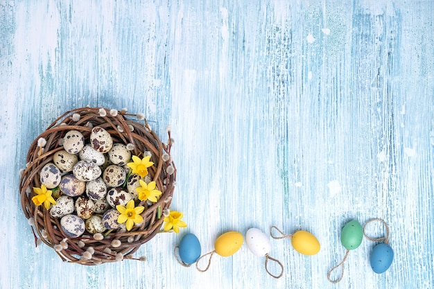 Narcissus, easter willow wreath and colorful easter eggs on blue background. top view, copy space