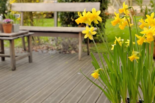 ウッドデッキを見下ろす水仙の花