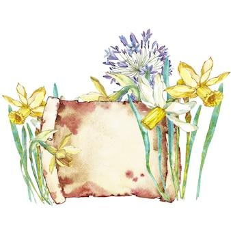 春の花narcissus。棚を見て水彩の手描きイラスト。イースターのデザイン。