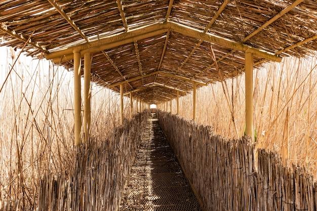 自然保護区の狭い廊下