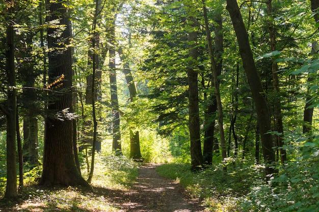Узкая тропинка среди множества деревьев посреди леса