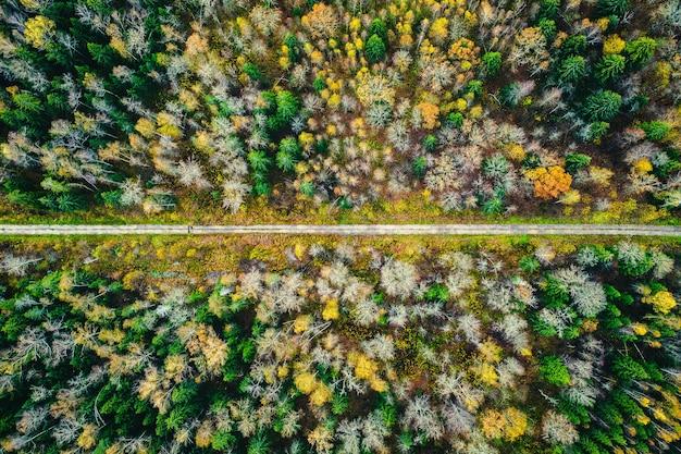 自然の背景として色とりどりの秋の森の狭い道。ドローンの空撮。