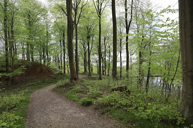 Narrow pathway in a forest surrounded by beautiful trees in a forest in hindsgavl, middelfart