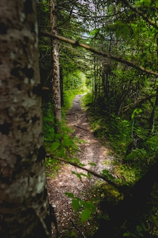 Narrow pathway in a forest with thick trees and greenery