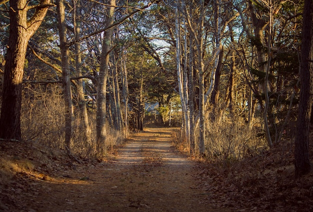 Narrow pathway going through a forest with large trees on both sides on a sunny day