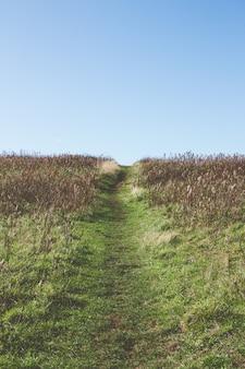 Узкая тропинка посреди травянистого поля под красивым небом