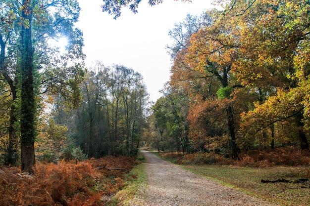 英国ブロッケンハースト近くのニューフォレスト内の多くの木の近くの狭い経路