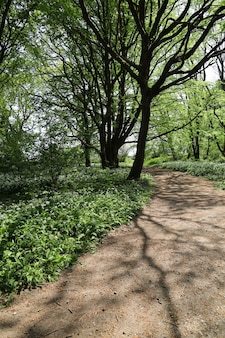 Narrow pathway surrounded by a lot of green trees in a forest in trelde naes, fredericia