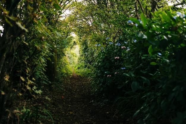 Узкая тропинка с красивой зеленью в лесу