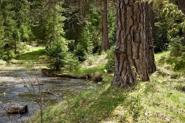 Узкая река в лесу в окружении красивых зеленых деревьев