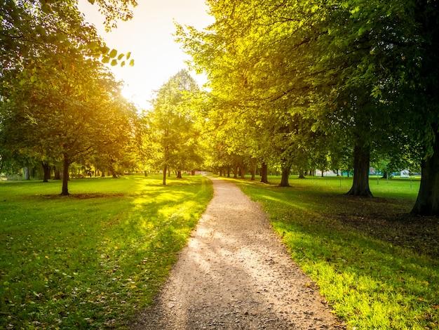 Узкая дорога в зеленом травянистом поле в окружении зеленых деревьев с ярким солнцем на заднем плане