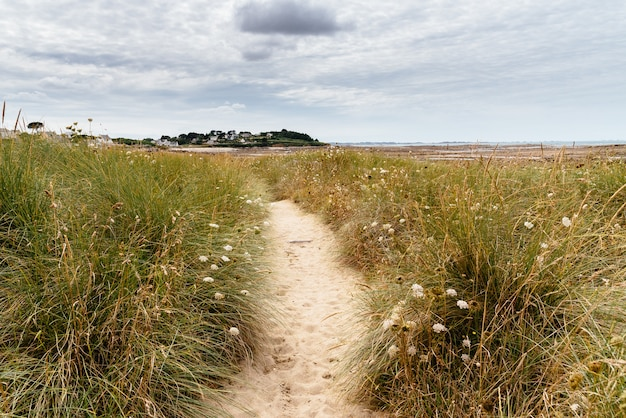 Narrow sandy path in the field with wild flowers