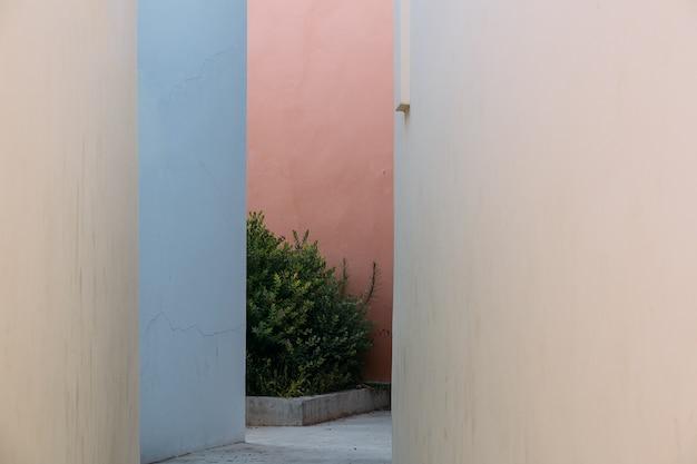 植物のある狭い通り