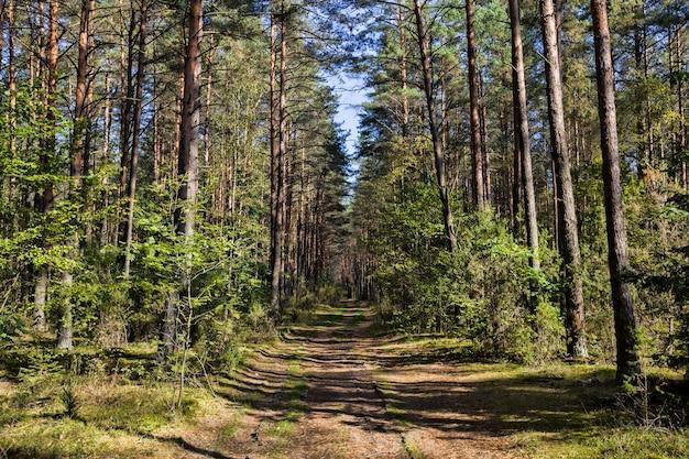 車と人の森を抜けて森に入る狭い道、混交林の9月の秋の風景、森の中の道