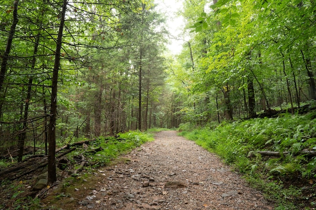 Narrow unpaved trail in the dense woodland covered with lush vegetation in the mid-summer