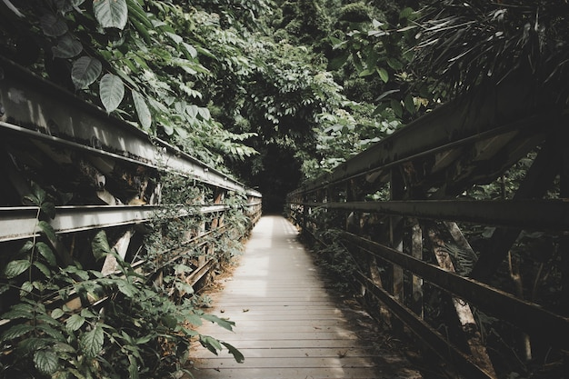 A narrow wooden bridge inside a forest